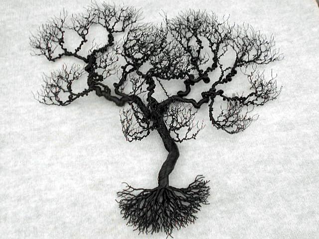 large-live-oak
